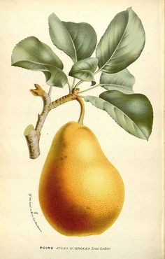 Houtte, L. van, Flore des serres et des jardin de l'Europe, vol. 17: t. 0 (1845)