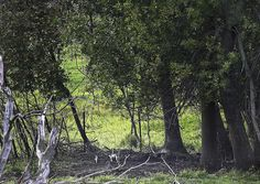 The remains of Jacob Wetterling were recovered in this tree line area of a cow…