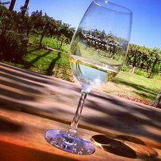 Summer white wine at Darcie Kent Vineyards