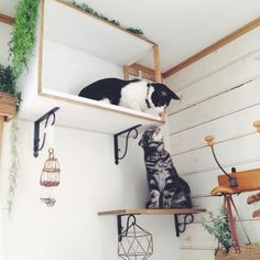 Diy Cat Shelves, Stair Shelves, Cat Work, Cat Accessories, Tiny House On Wheels, Animal Crafts, Pretty Cats, Dog Houses, My Room