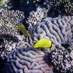 Chasing fishes at Lelepa Island's marine protected area. #KeepCalmAndJasTravel Lelepa Island, Vanuatu