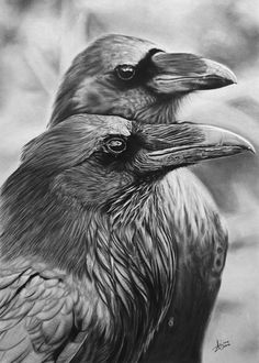 Ravens by kornrad on deviantART