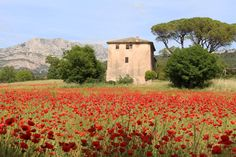 Beau printemps dans la campagne Aixoise. O.Boissinot