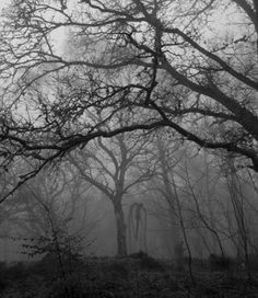 Look closley and you will see slender man Slender Man, Creepy Woods, Epping Forest, Creepy Images, Creepy Pictures, Funny Pictures, Mystique, Scary Stories, Paranormal Stories