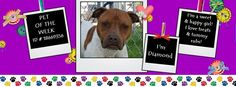 DIAMOND, the Fort Worth (TX) ACC Pet of the Week