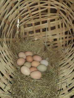 Aqui na roça tem muitos ovos caipira vc gosta.??