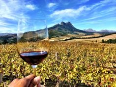 Ten things to do in Stellenbosch