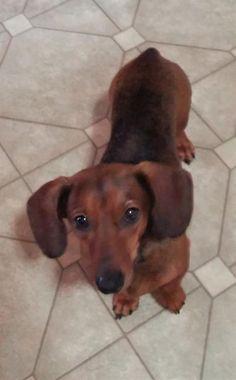 Meet Jerry #2 in MI - an adoptable pet Dog