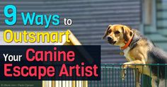 Dashing out the door is one particularly undesirable behavior many dogs engage in that their owners desperately wish they wouldn't. http://healthypets.mercola.com/sites/healthypets/archive/2016/02/22/dogs-door-dashers.aspx