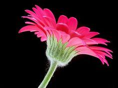 Image result for flower petal shapes photograph