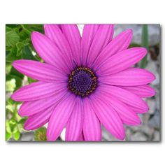 Wildlife Photography, Street Photography, My Flower, April Flower, Daisy Flowers, Fall Flowers, Birthday Postcards, Purple Daisy, Hardy Perennials