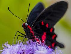 Beautiful creature!! ,