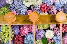 愛知県・一宮市「御裳(みも)神社」はあじさいの名所なのをご存知ですか?そんな「御裳神社」はただあじさいが咲いていて美しいだけでなく、手水場に切り花のあじさいを浮かばせていて、それが絶景と話題なので、その詳細をご紹介したいと思います。