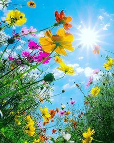 Flower Background Wallpaper, Flower Backgrounds, Arrangements Ikebana, Vida Natural, Beautiful Flowers Wallpapers, Wonderful Flowers, Spring Photos, Nature Adventure, Flower Pictures