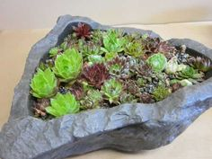 succulents in fake rock