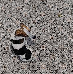 Guel (Hunting dogs),2009. óleo sobre tela [oil on canvas], 100x100cm. Coleção Particular [ Private Collection] by ana elisa egreja, via Flickr