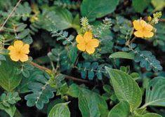 Herbal Medicine, Life Is Beautiful, Gardening Tips, Macarons, Board Games, Herbalism, Flora, Herbs, Plants