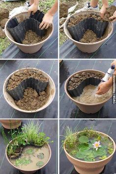 Do this in a bigger and deeper flower pot for a home made mini lily pond!