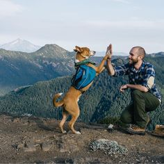 """Give us a high✋ if you love going hiking and camping with your dog! #campingwithdogs @mikehoderman @ruffwear"""