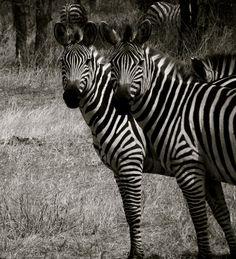 Animais selvagens