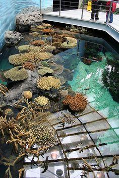 LISBOA AQUARIUM Corales