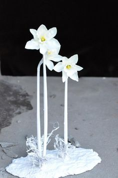 White narcissus flower