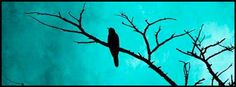 Silhouette of a Raven on tree branch in a turquoise sky. Facebook cover photo, fb covers