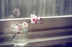beautiful, beautiful flowers, blossom, cherry blossom, cute, decor