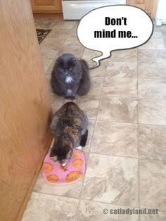 Catladyland: Cats are Funny: Lurker Cat is Lurking Again #cat - Learn more at - Catsincare.com! Cat Food, Funny Cats, Dogs, Animals, Cat Feeding, Animales, Animaux, Pet Dogs, Funny Kitties