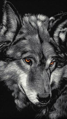 Black Wolf iPhone X Wallpapers Wolf Wallpapers Pro in 2020 Wolf wallpaper Horse wallpaper Hd dark wallpapers
