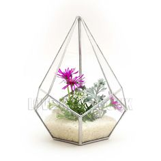 Teardrop Small Silver Geometric Glass Terrarium / Hand Made Planter / Modern Urban Garden Design Interior Stained Loveglass Lenka 3d Air Plant Succulent Cactus Shapes Airplant Copper Black Tiffany Technique Soldering Ebay Folksy Etsy Amazon Triangle Present Gift Craft UK England Fine Art Decoration Wedding Holder Platonic Solid Octagon Display Christmas Ring Solder Soldering Skill Clear Transparent Square Planter / Air Plant