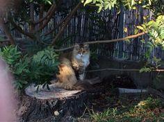 Cassie Cat | Pawshake