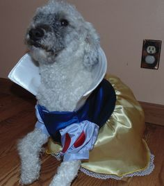 Snow White Dog Costume Medium Dog by FruFruandFeathers on Etsy $40.00 & Simplicity Pattern 5838 Disney Princess Dog Costumes Belle Snow ...