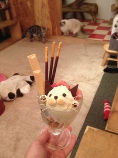 milky-honey:  Cat cafe in Kyoto!!!!