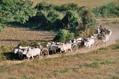 Discover the Unique Attractions in Myanmar 7 Continents, Bang Bang, Nature Photos, Cattle, Farmers, Trailers, Avengers, Landscapes, Asian