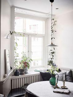 Going up in 2018: indoor climbing plants