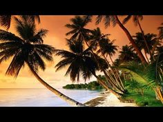 1 Hour of Tropical, Caribbean, and Hawaiian Music - YouTube