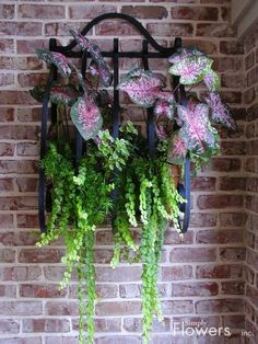 WOW!  Beautiful black iron container on the wall with Caladiums, Fern and Creeping Jenny are always a stunning  picture!!