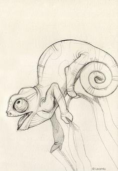 chameleon sketch - Google Search