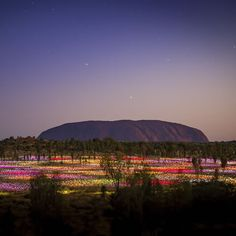 Official website for Ayers Rock Resort - Located only from Uluru (Ayers Rock),the Resort offers 4 hotels & accommodation, tours and a campground. Las Vegas, Ayers Rock, Health Challenge, Festival Lights, What A Wonderful World, Australia Travel, Wonders Of The World, Places To See, Tours