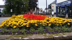 Cumbrian Finalists to Compete in 2017 RHS Britain in Bloom Awards http://www.cumbriacrack.com/wp-content/uploads/2017/02/penrith-flowers.jpg Dalston, Kendal, Penrith BID (Business Improvement District) and Silloth on Solway have been selected to represent the Cumbria region    http://www.cumbriacrack.com/2017/02/01/cumbrian-finalists-compete-2017-rhs-britain-bloom-awards/