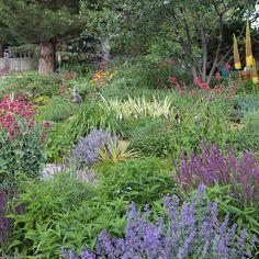 The Dry Garden - Lambley Nursery Meadow Garden, Dry Garden, Gravel Garden, Outdoor Landscaping, Outdoor Plants, Landscaping Ideas, Drought Tolerant Landscape, Italian Garden, Spanish Garden