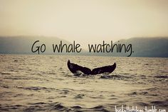 go whale watching