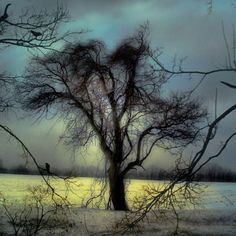Gothic Trees Crows Fine Art Surreal Metallic via Etsy