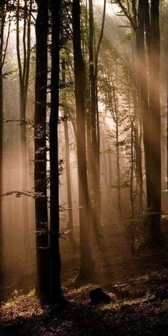 ▲□▲□▲□▲ forest ▲□▲□▲□▲