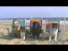 Funny Dogs At The Beach - Compilation : Video Clips From The Coolest One