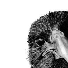 The Secret of the Raven Art Print by jojotou - X-Small Crow Art, Raven Art, Raven Feather, Raven Tattoo, Crow Tattoos, Deer Tattoo, Tattoo Tree, Tattoo Ink, Arm Tattoo