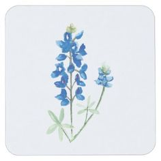 Texas Bluebonnets Square Paper Coaster - floral style flower flowers stylish diy personalize