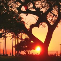 Heart Tree...so wanna find a tree like this