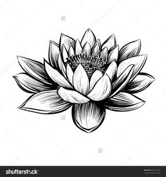 Water Lily Pencil Drawings | Water Lily Drawings Water ...